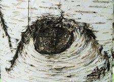 发光和开花在春天,巨型垂悬的柳树树山水画,木纹理的各种各样的树山水画, 免版税库存照片