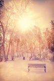 发光在一个冰川覆盖的公园的太阳 免版税库存图片