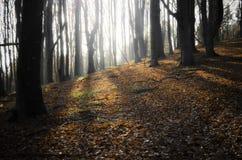 发光在一个森林里的太阳在秋天 免版税库存照片