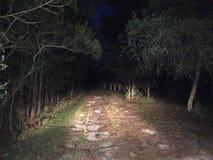 发光在一条黑暗的偏僻的道路下的车灯 库存图片