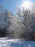 发光在一棵多雪的树的上面 库存图片