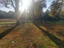 发光在叶子的太阳 免版税库存图片