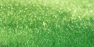 发光在早晨的绿色领域 免版税图库摄影