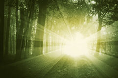 发光在有雾的一个森林里的光在日落 库存照片