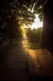发光在木道路的太阳射线被定调子的照片在森林 免版税库存图片