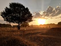 发光在树后的日落光束 免版税库存照片