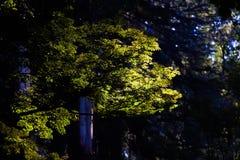 发光在树木天棚的光 库存照片
