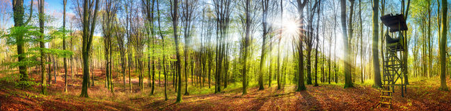 发光在森林里的太阳春天,宽全景 免版税库存照片