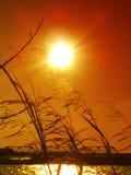 发光在河芦苇上的明亮的橙色日落 图库摄影