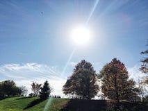 发光在秋天树的明亮的太阳 免版税图库摄影