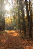 发光在秋天森林的太阳 免版税库存图片