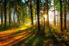 发光在秋天森林里的太阳 库存图片
