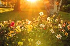发光在花的太阳 免版税库存照片