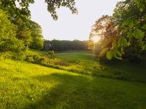 发光在草甸的太阳 免版税库存图片
