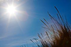 发光在草的太阳 免版税库存照片