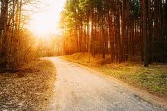 发光在路,道路,走道的太阳通过森林日落日出 免版税库存照片