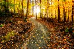 发光在金黄森林道路下的太阳 库存照片