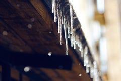 发光在阳光下和垂悬从屋顶的冰柱 免版税库存照片