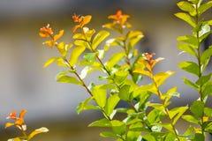 发光在阳光下的美好的叶子分支 免版税库存图片