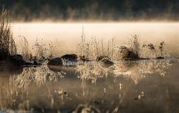 发光在霜的阳光涂上了岩石和草在水的边缘 变冷在隔夜11月空气之前 免版税图库摄影