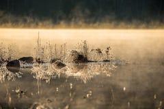 发光在霜的阳光涂上了岩石,并且在水的草渐近 变冷在隔夜11月空气之前 库存图片