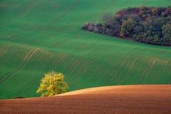 发光在青山和秋天灌木背景的日落的金黄布什  Kyjov南摩拉维亚捷克 库存图片