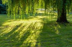 发光在绿色庭院里的太阳 免版税库存图片