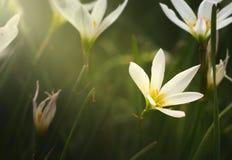 发光对花的光 向量例证
