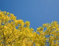 发光星期日的秋叶 免版税库存照片