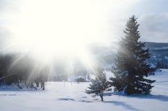 发光由在多雪的山上面的阳光的庄严白云杉在冬天 库存照片