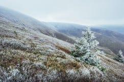发光由阳光的冬天风景 严重的场面 风景雾 库存图片