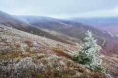 发光由阳光的冬天风景 严重的场面 风景雾 免版税图库摄影