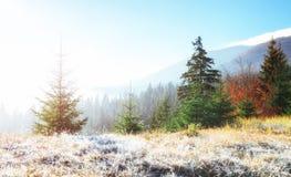 发光由阳光的冬天风景 严重的场面 风景雾 图库摄影