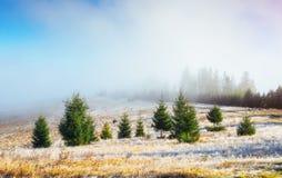 发光由阳光的冬天风景 严重的场面 风景雾 库存照片