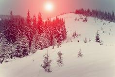 发光由阳光的意想不到的风景 与杉木森林新年` s风景的冬天 在树的新鲜的雪 库存照片