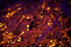 发光的光在冬天森林里 免版税库存照片