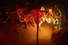 发光的光在冬天森林里 免版税图库摄影