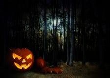 发光的南瓜在月亮下的一个黑暗的神秘的万圣夜森林里 免版税库存照片