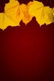 发光的叶子深红背景 免版税库存图片