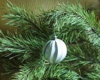 发光的圣诞树在背景、广告和设计的一个绿色杉木分支戏弄 免版税库存图片