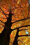 发光的树在10月 免版税库存照片