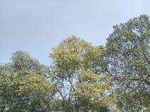 发光的树 免版税库存图片