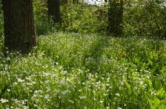 发光的森林沼地 库存图片