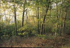 发光的森林 免版税库存照片