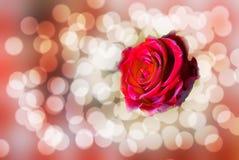 发光的玫瑰色背景 图库摄影