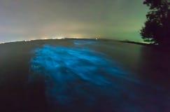 发光的生物发光浮游生物 库存图片