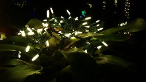 发光的白色圣诞节快乐光,关闭在庭院装饰的一个热带植物在深黑色夜背景中 库存照片
