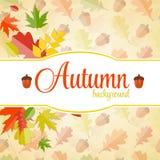 发光的秋天自然叶子背景 向量 免版税库存图片