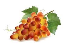 发光的红葡萄捆成一束和在白色的叶子 库存照片