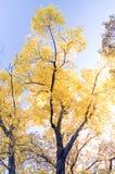 发光的结构树 库存照片